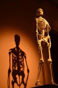 osteopatia y estructura osea