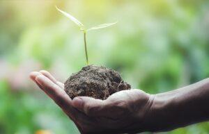 cuidar el planeta-En Manos de Nara